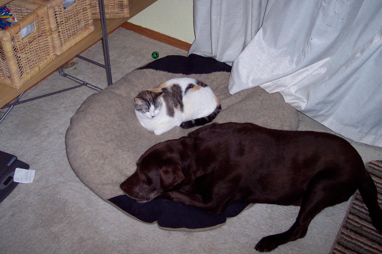 compartiendo sofá