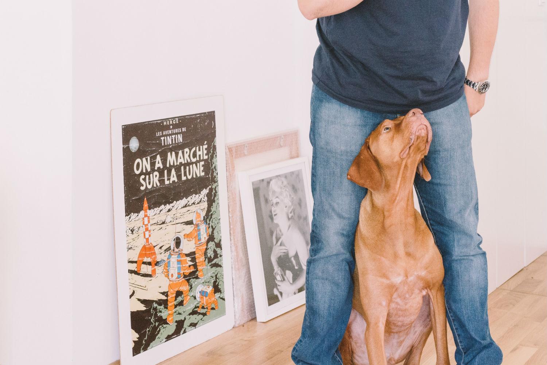 Fresh Gallery perro