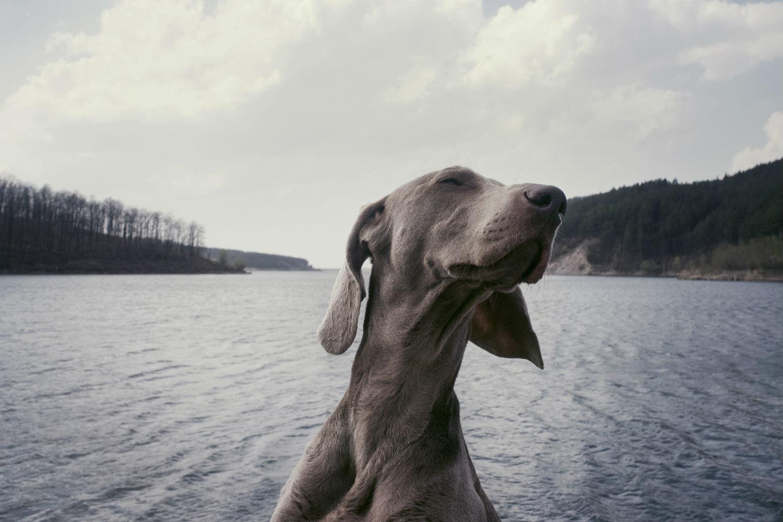 A dónde ir con perro Bilbao