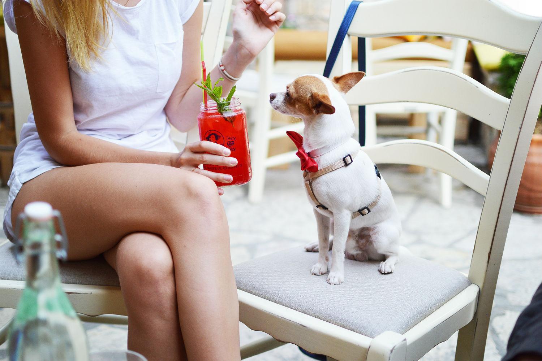 Restaurantes con perros Valencia