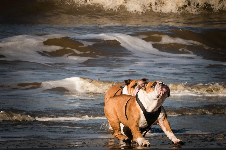 Planes Murcia perro Semana Santa