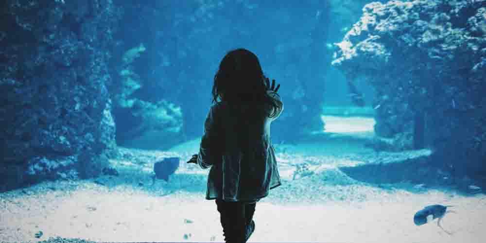 Foto de una visita al Aquariumm de Barcelona con niños.
