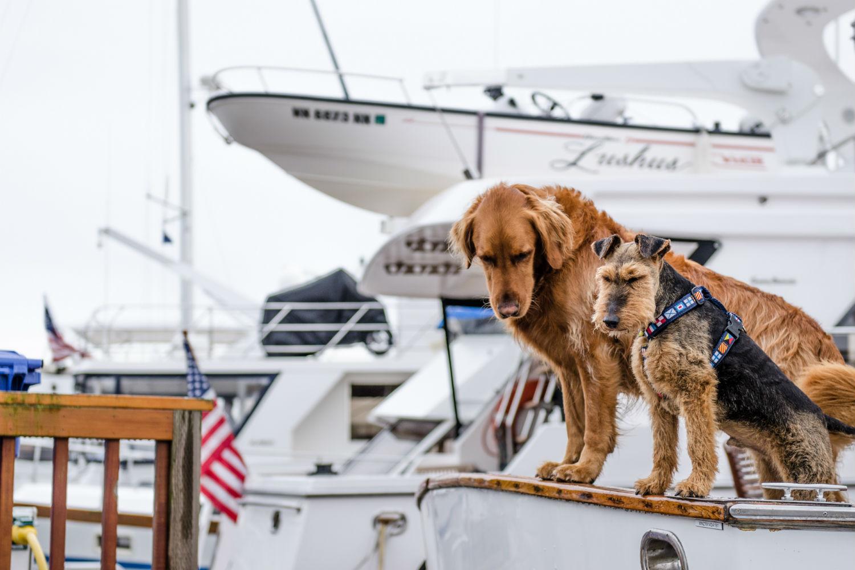 Viajes perrunos: Qué hacer perros en Bilbao