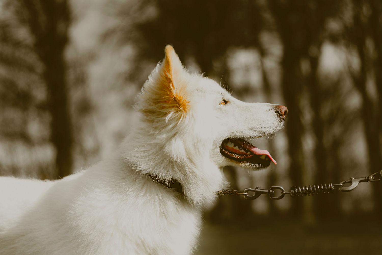 7 Rutas que hacer con tu perro en Madrid