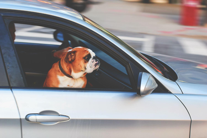 Dónde ir con perro Sevilla