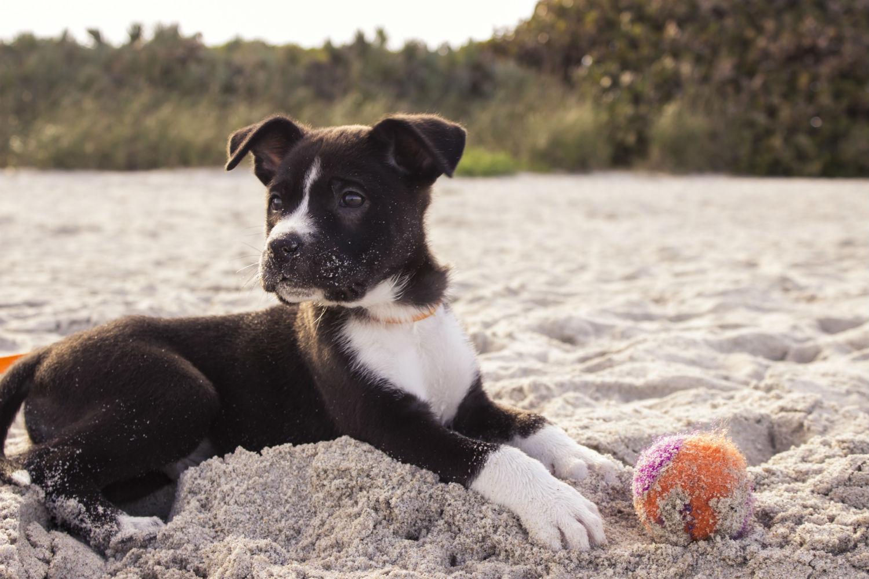 Playas para perros Murcia