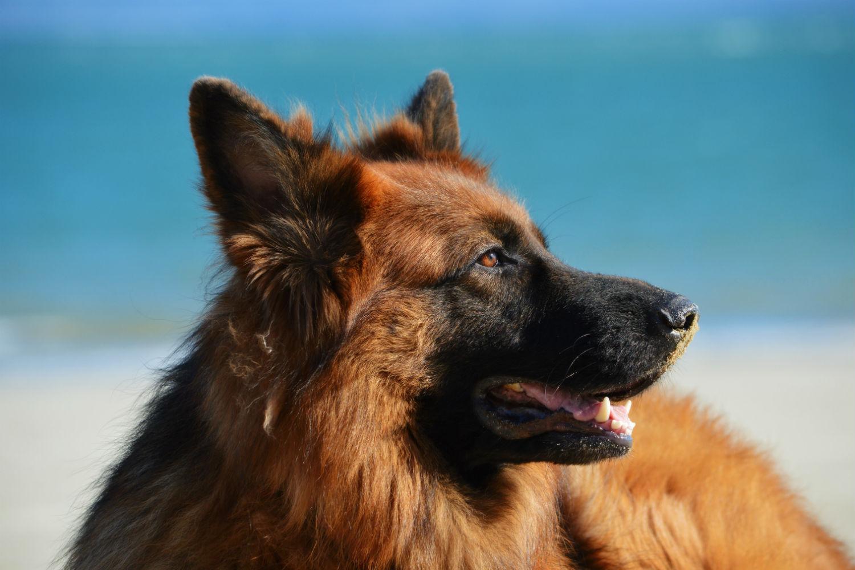Playas perros Málaga