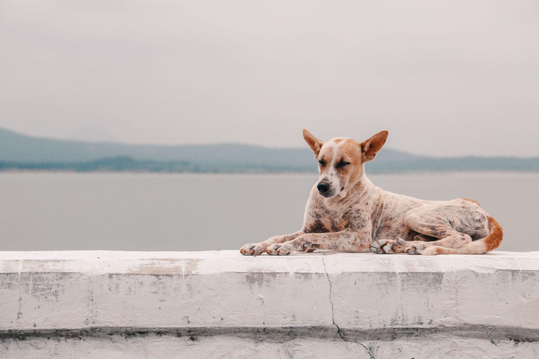 Rutas que hacer con tu perro en Valencia