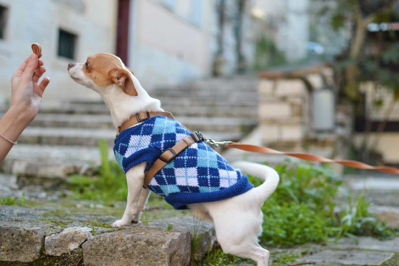 bares perros Bilbao
