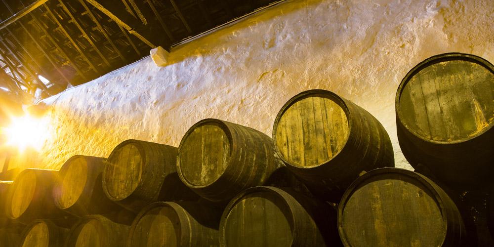 Qué ver en Oporto: Visitar una bodega en Oporto
