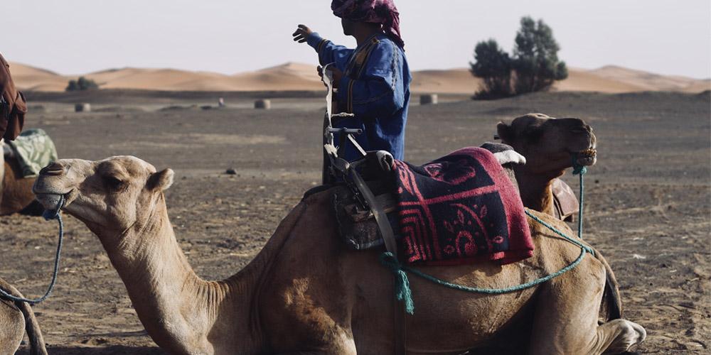 Qué ver en Marrakech: Paseo en camello por el palmeral