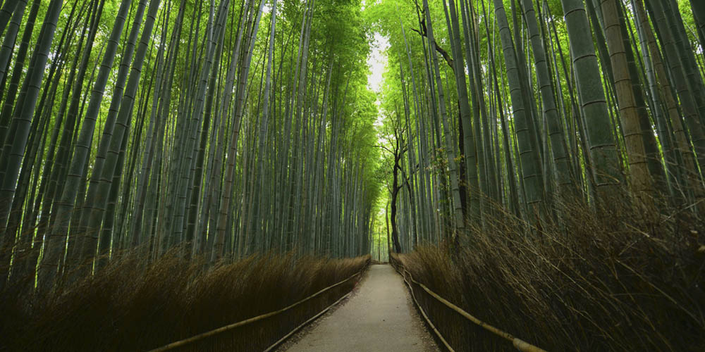 Viajar a Japón: Arashiyama en Kioto
