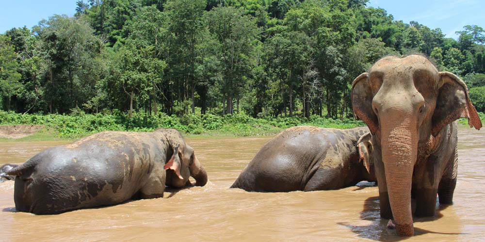 Viajar a Tailandia: Chiang Mai
