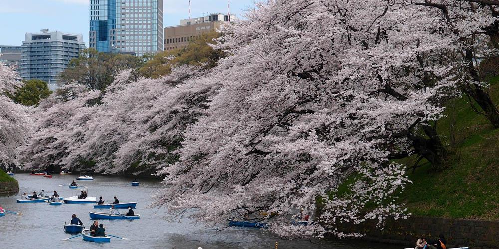 Viajar a Japón: Ueno koen Tokio