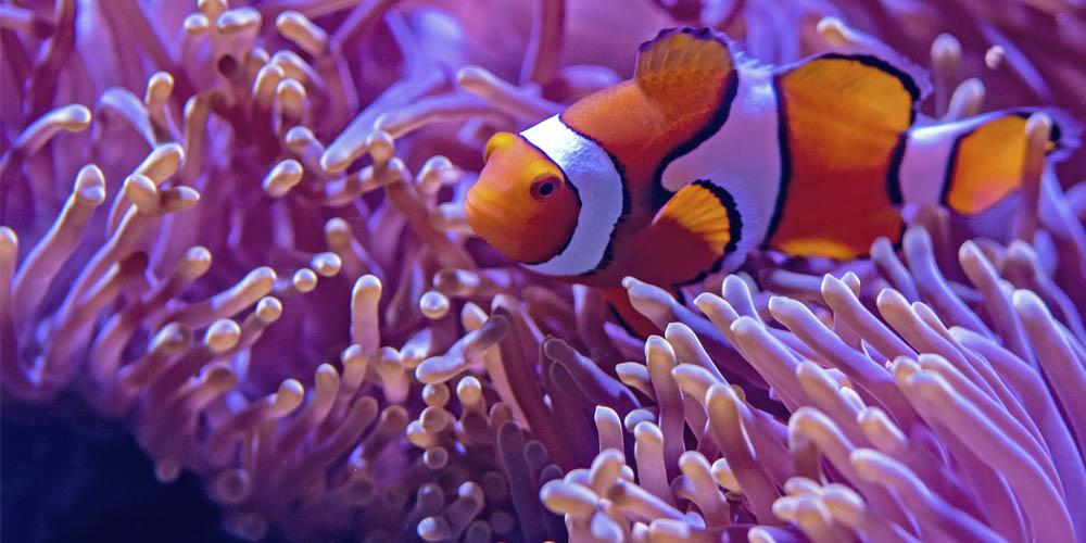 Qué ver en Sidney: el acuario de Sidney