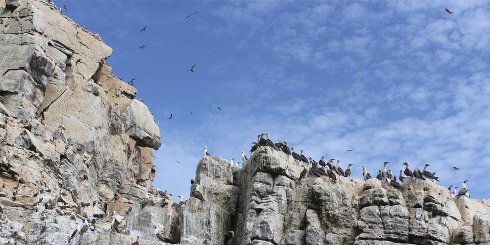 Viajar a Perú: Islas Palominas