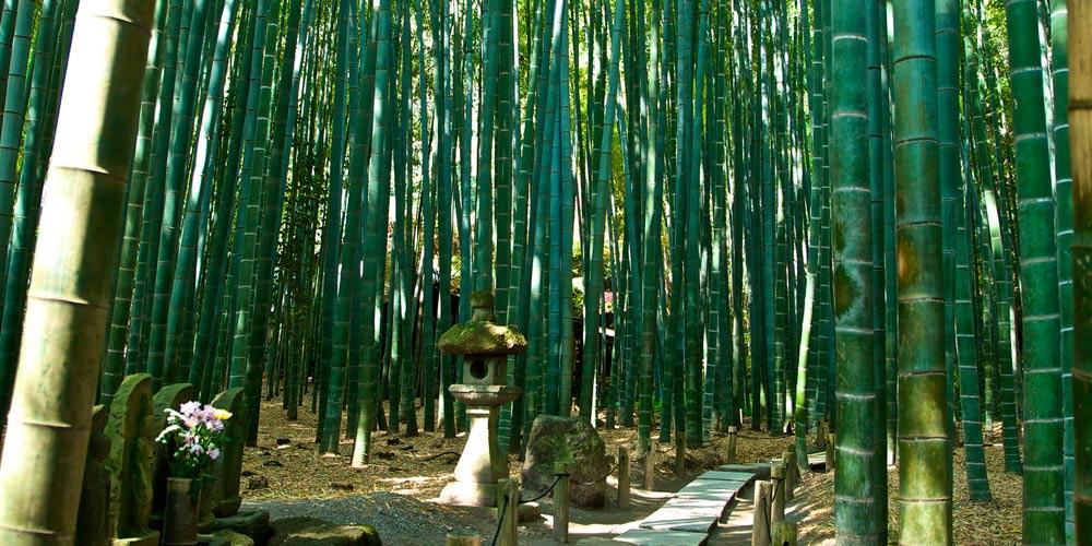 Excursión a Kamakura desde Tokio: Templo Hokokuji