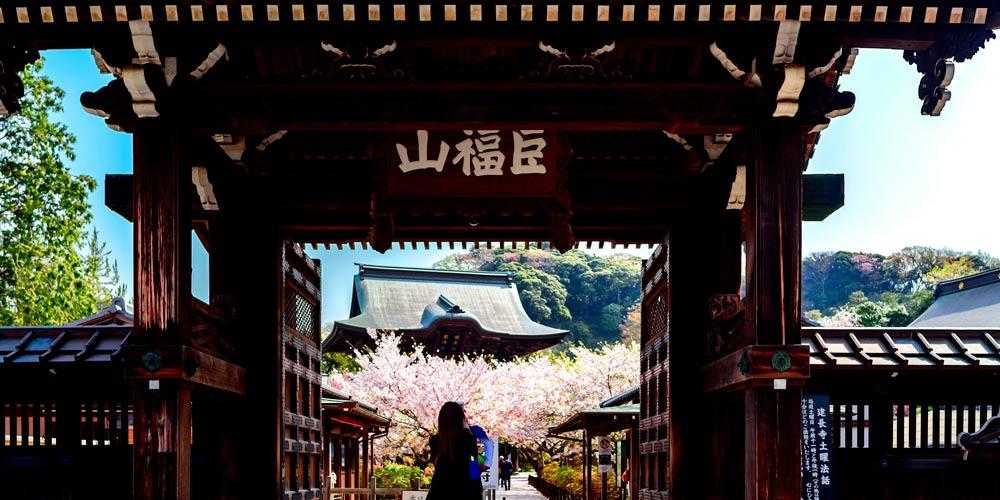 Excursión a Kamakura desde Tokio: Templo Hokokuji: Kencho Ji