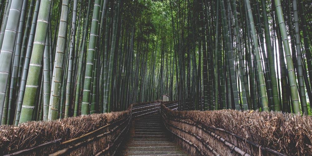 Excursión a Kioto desde Tokio: Arashiyama