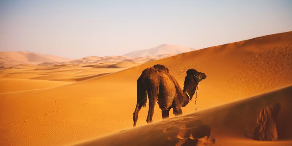Desierto de Zagora o Merzouga