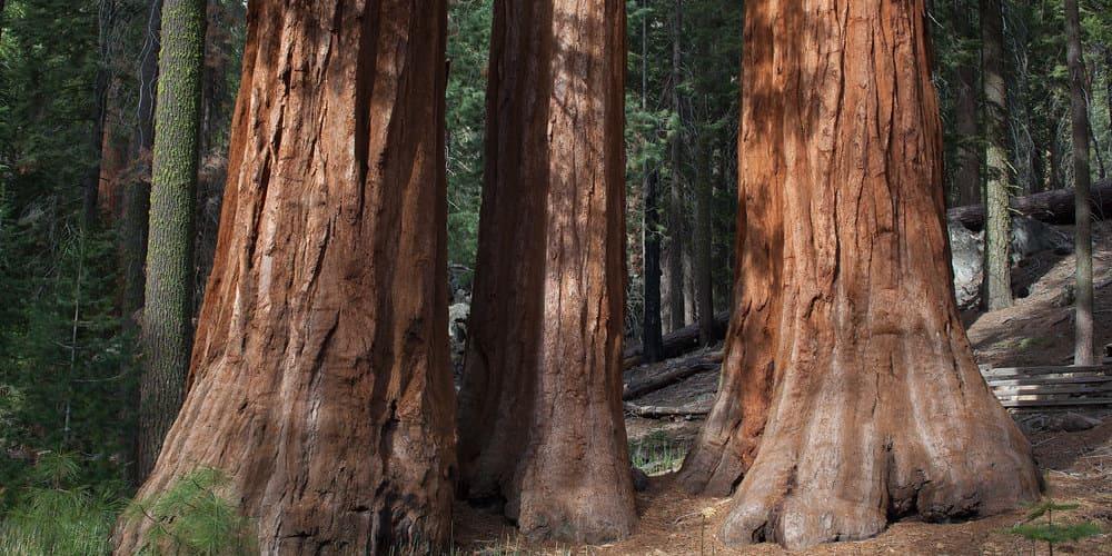 Parque Yosemite en estados unidos
