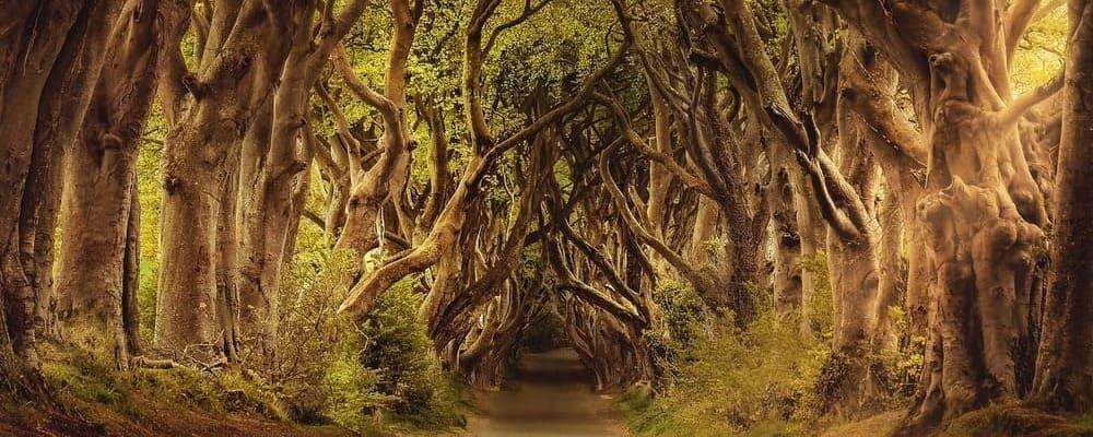 """Imagen del escenario de las secuencias del Camino Real de la serie """"Juego de Tronos""""."""