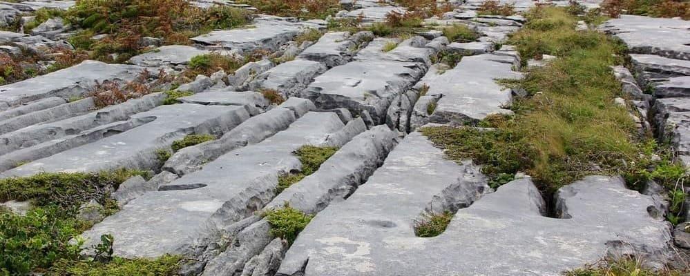 Imagen de la vegetación del Parque Nacional de Burren.