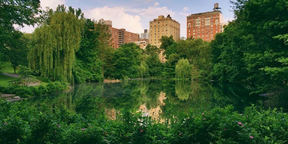 Imagen de Central Park con la ciudad de Manhattan de fondo.