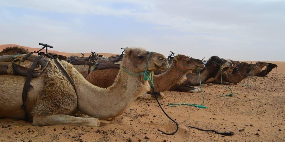 Escapada al desierto de Merzouga desde Marrakech