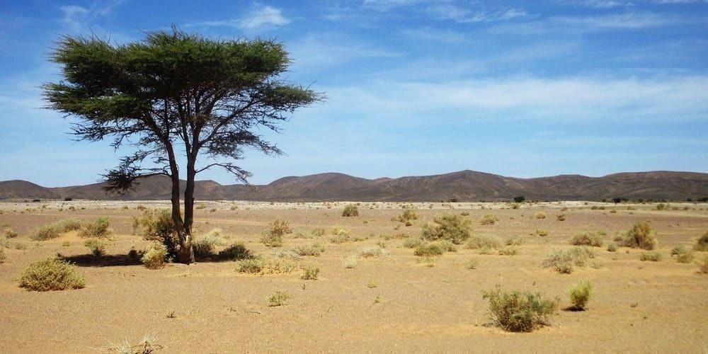 El tiempo en Zagora en Marruecos