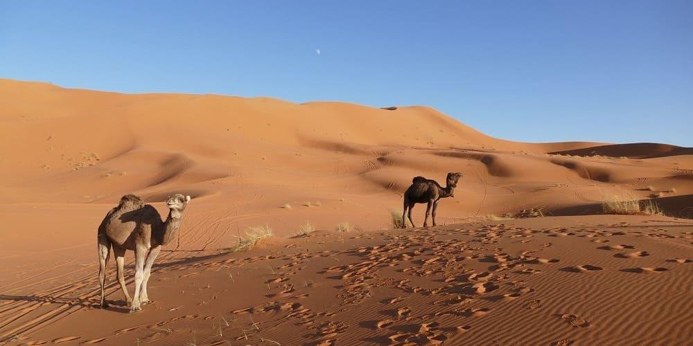 Qué hacer en Marrakech en mayo - excursión al desierto
