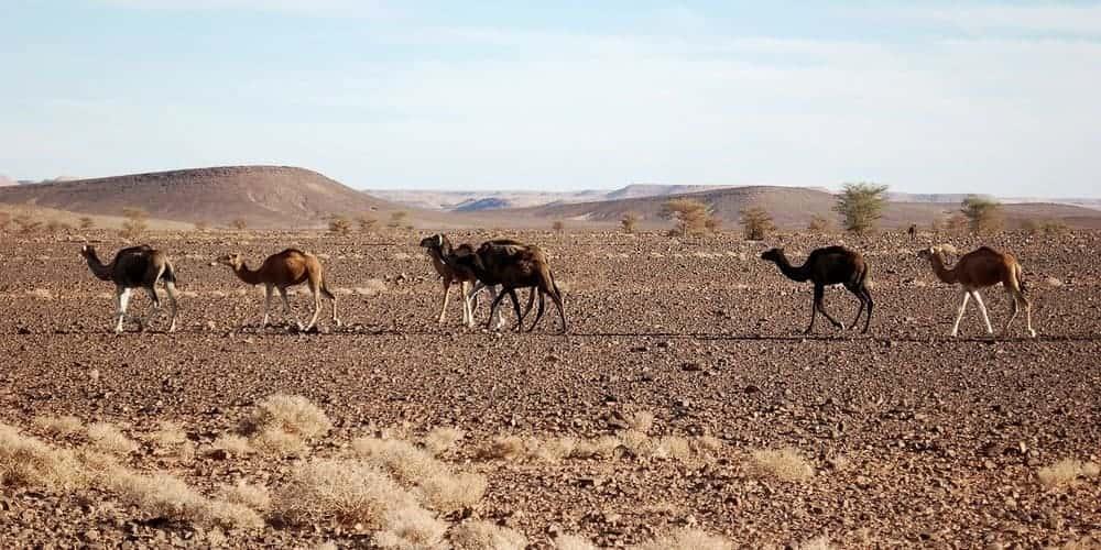 Ir de Marrakech a Zagora en un tour organizado