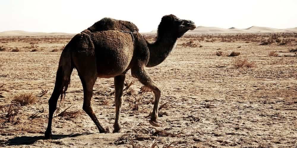 Cómo llegar desde la Ciudad Roja al desierto del Sáhara