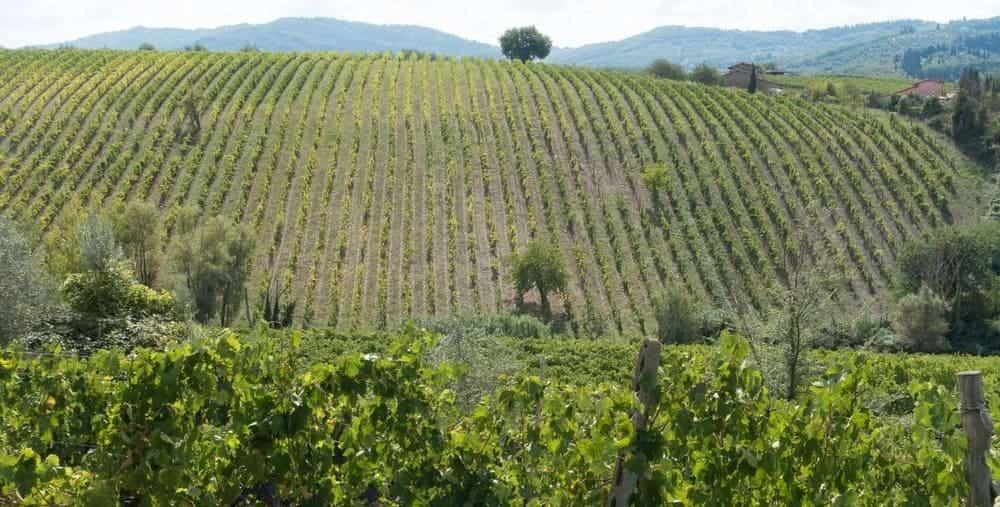 Excursión desde Florencia al Valle de Chianti