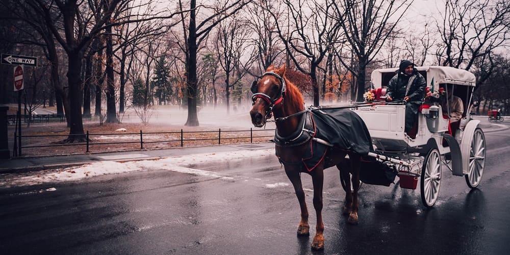 Tour por Central Park en calesa