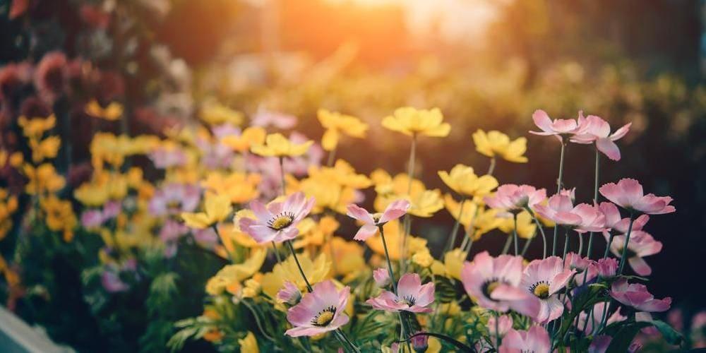 Flores del jardín de los Campos Elíseos en abril.