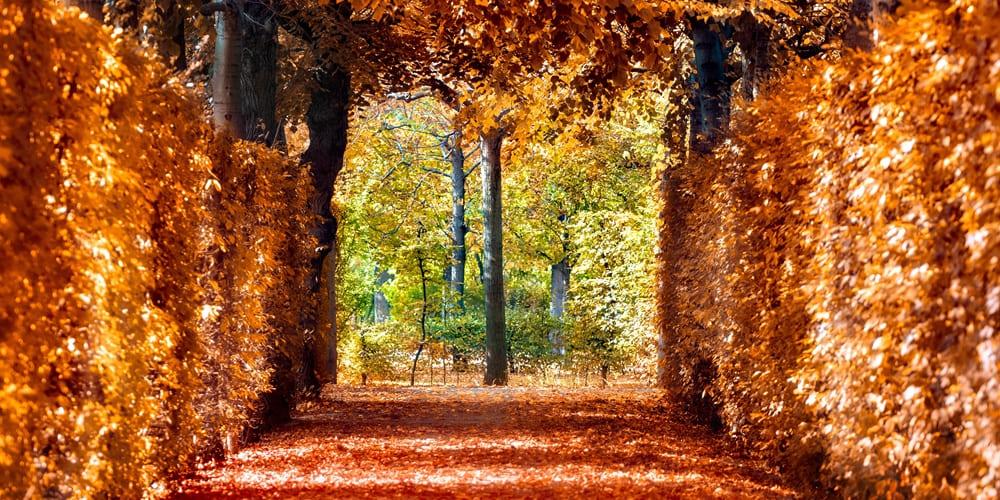 Salida a los bosques de Viena