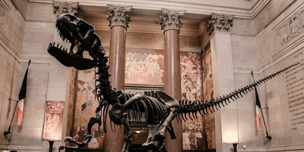 Visita al Museo de Historia Natural con niños en Nueva York.