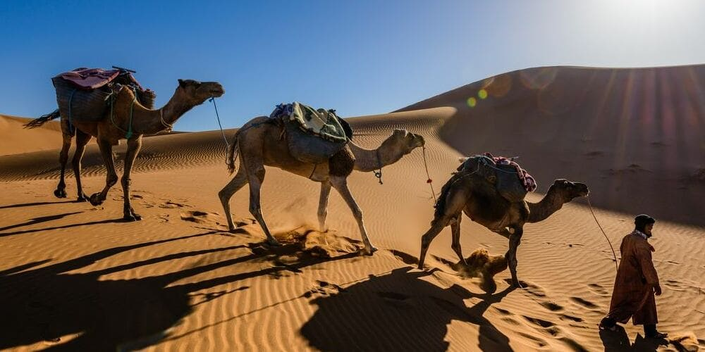 Paseo a camello por el desierto de Marrakech
