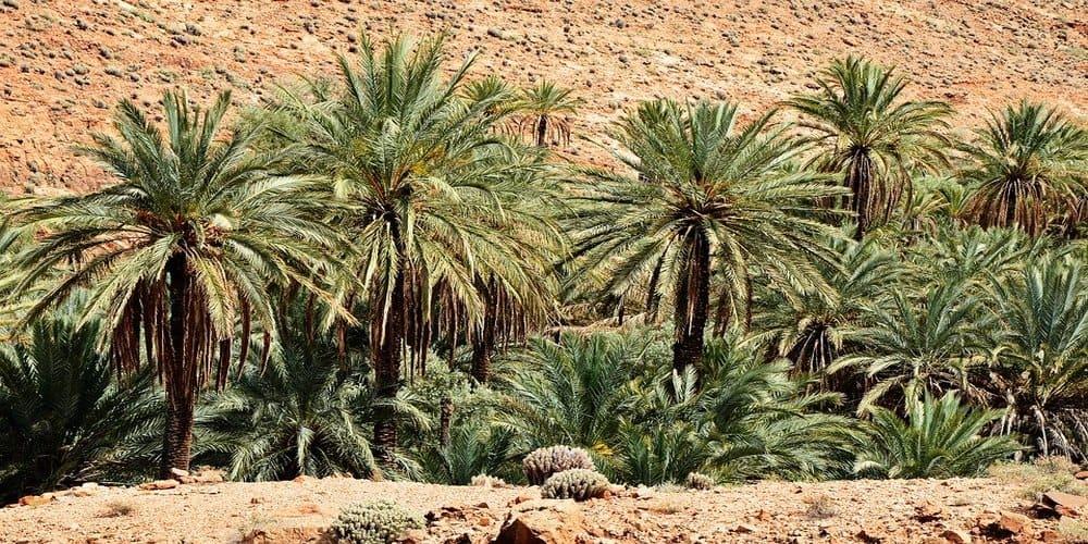 Tiempo y clima en Marrakech en abril en el Palmeral