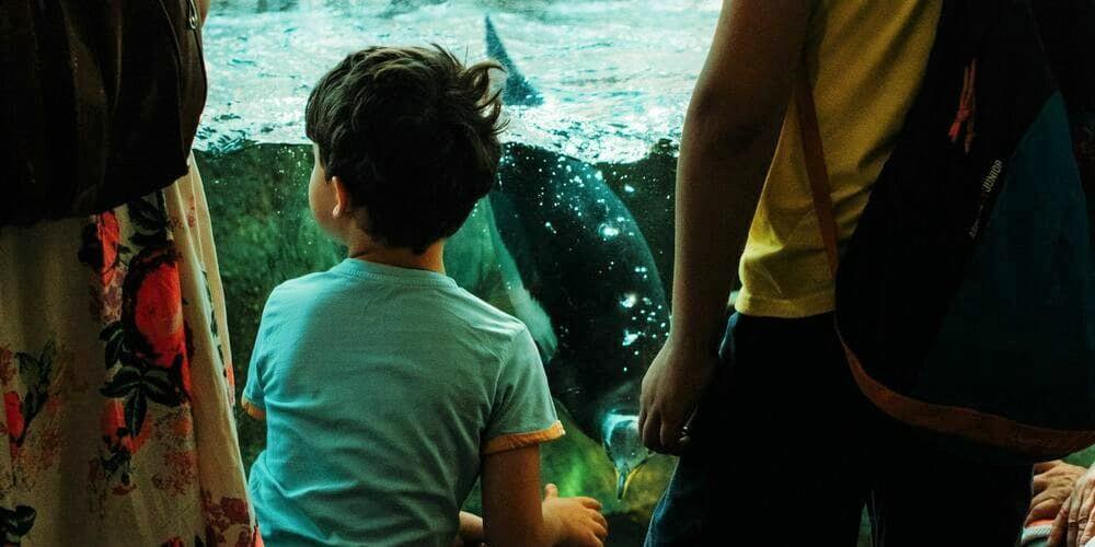 Niño viendo pingüinos en el acuario.