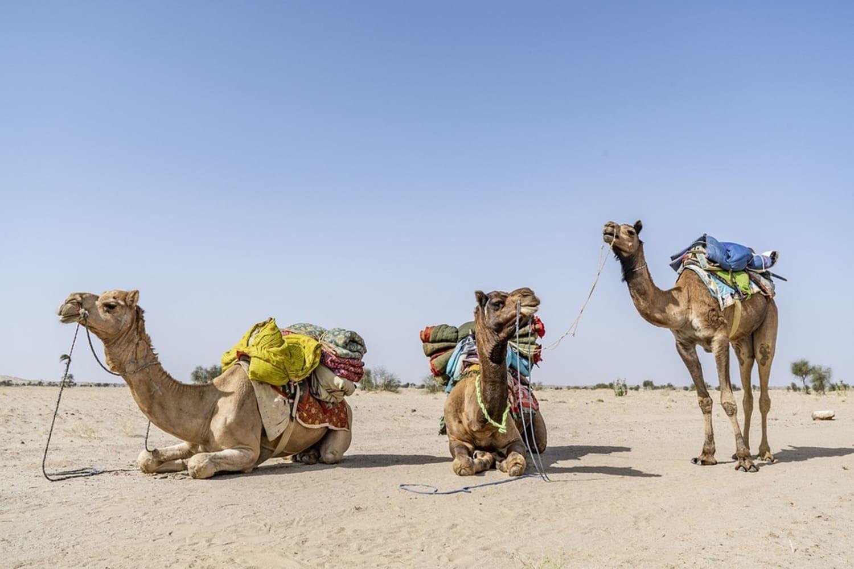 Paseo en camello en Marrakech: Mejores excursiones
