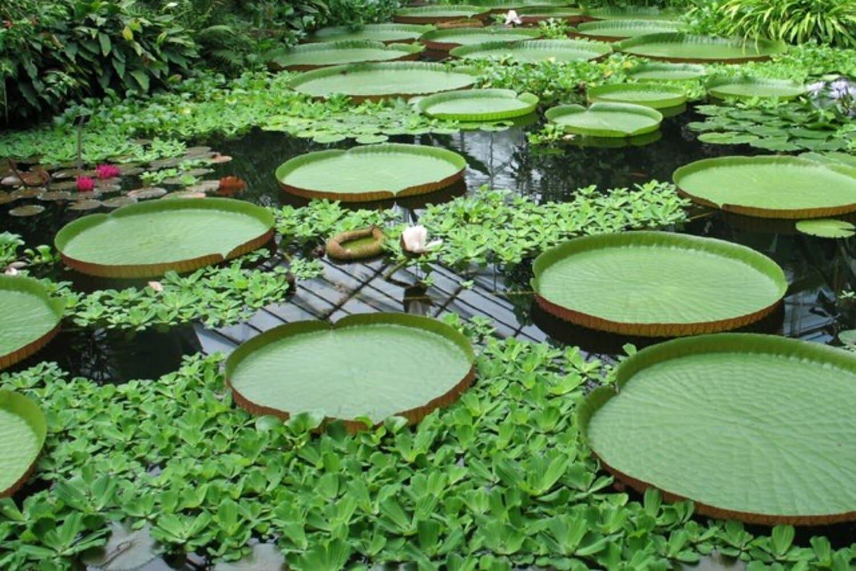 Un lago en el Jardín Botánico de Edimburgo