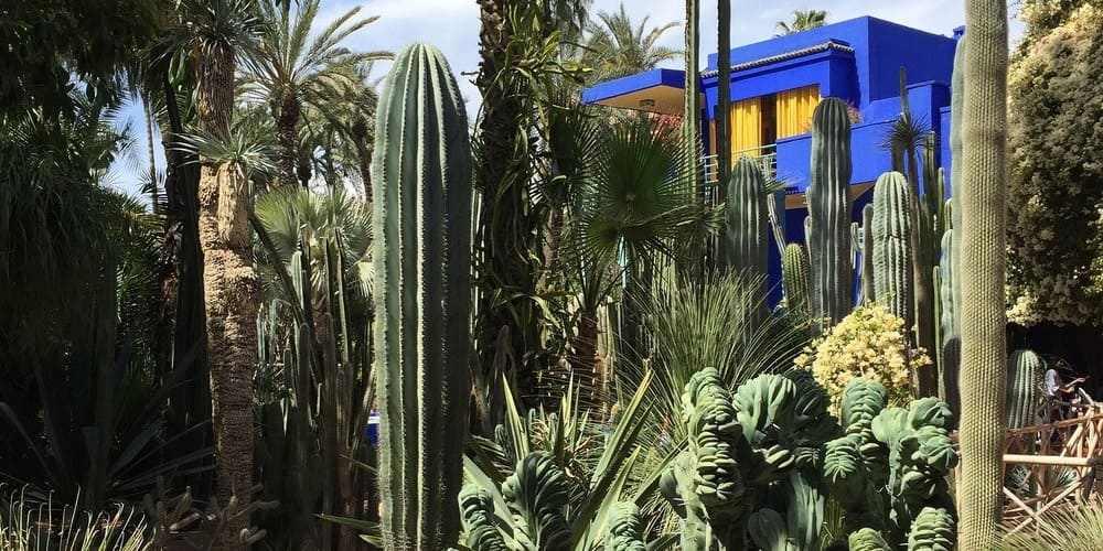 Cactus en el Jardín de Majorelle.