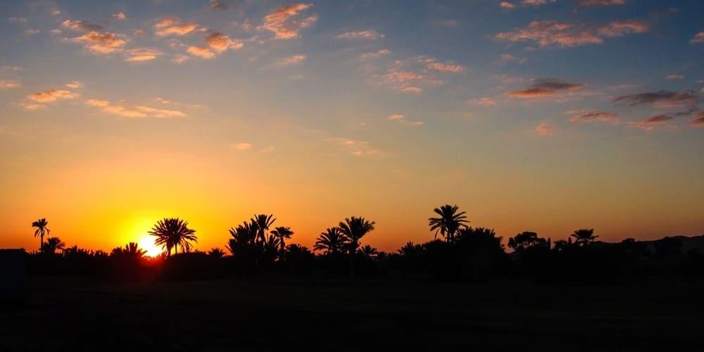 Qué hacer en 4 días en Marrakech - visitar El Palmeral