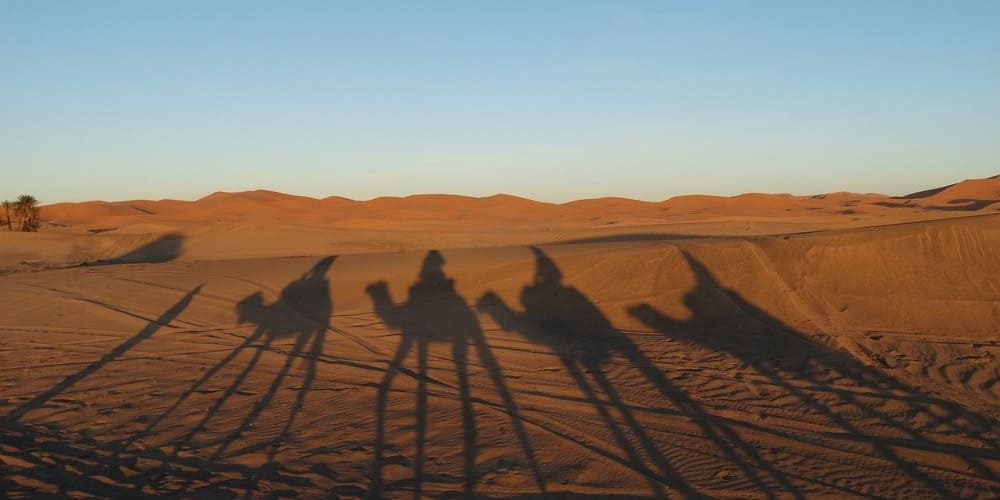 Excursión en camello por el desierto.
