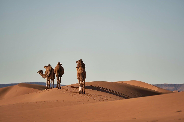 La temperatura en Marrakech en julio en el desierto es muy elevada