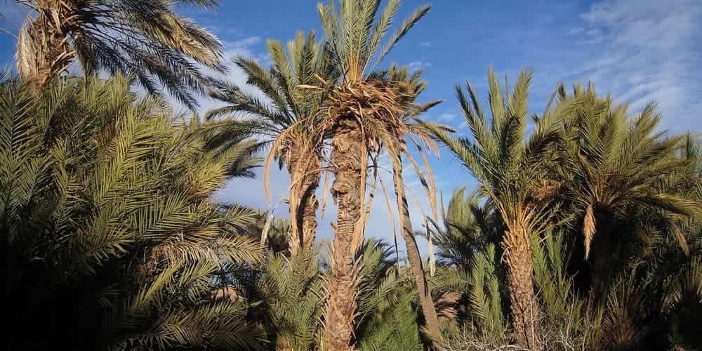 Mejores actividades adaptadas al clima de Marrakech en octubre