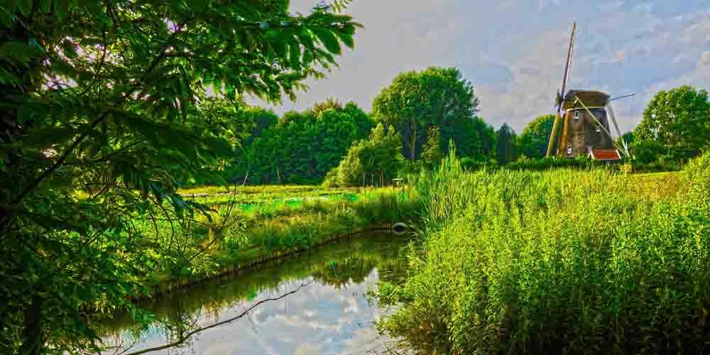 El molino De Riekermolen de Ámsterdam escondido entre la vegetación.