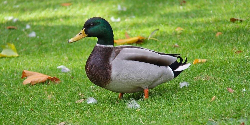 Conoce todos los animales del Phoenix Park de Dublín